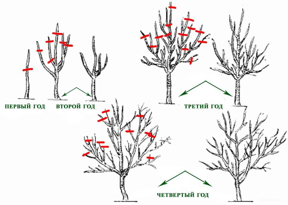 Обрезка-деревьев