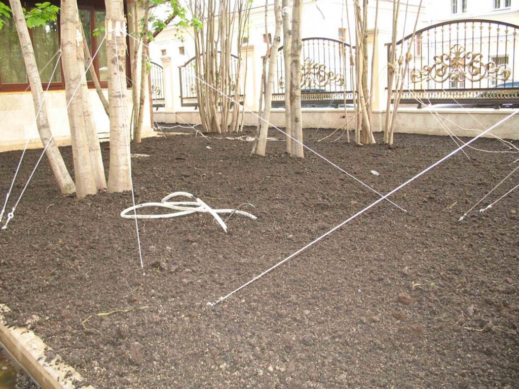 газонная-посев газона