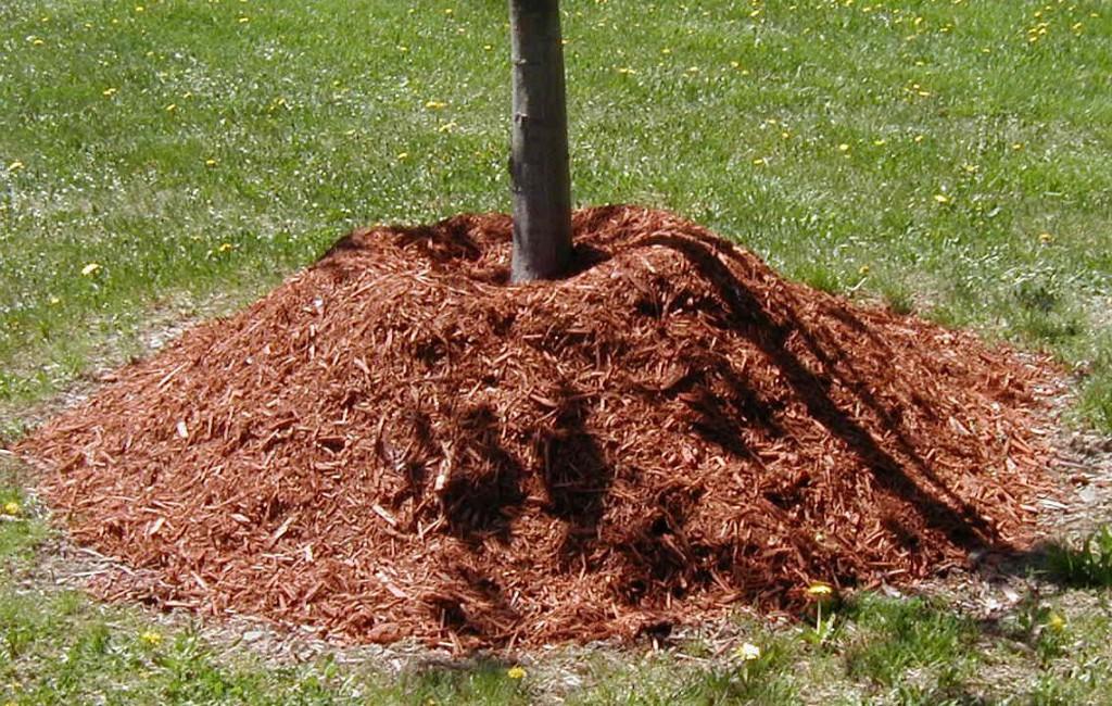 мульчирование деревьев