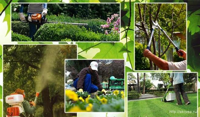 работы по саду и огороду