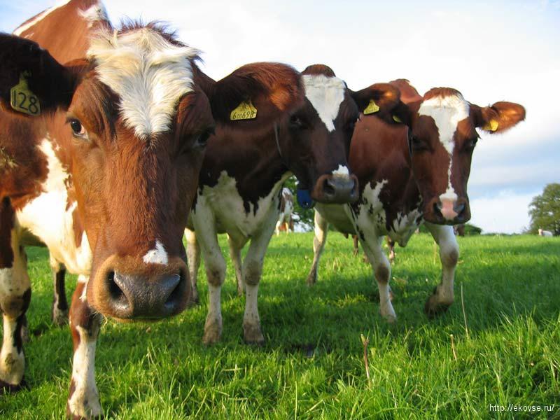 Биотехнологии для животноводства