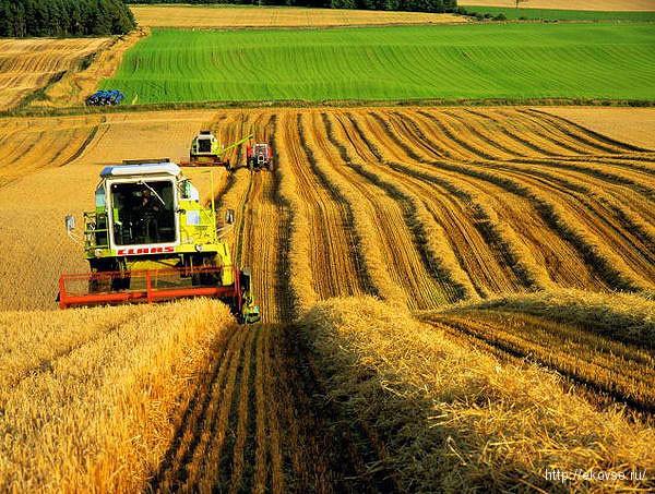 биотехнологии для растениеводства