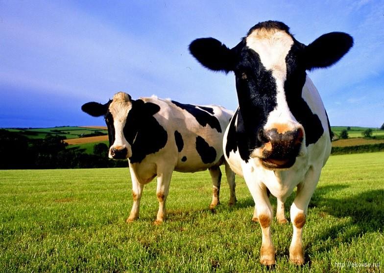 биотехнологии в животноводстве