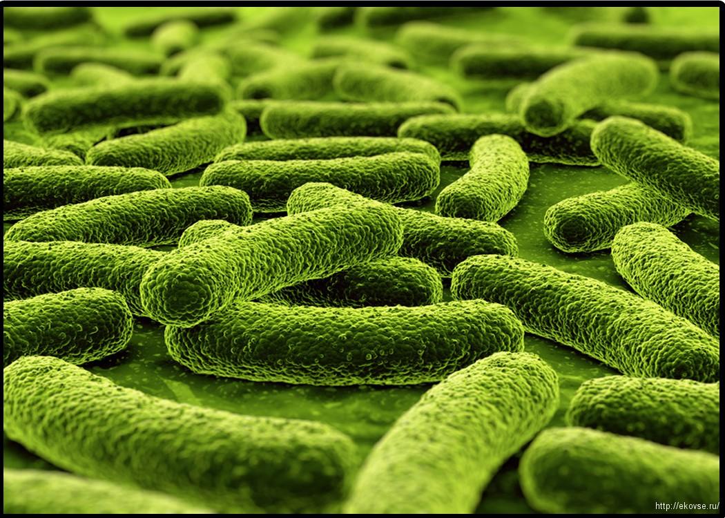 пробиотики эковсе