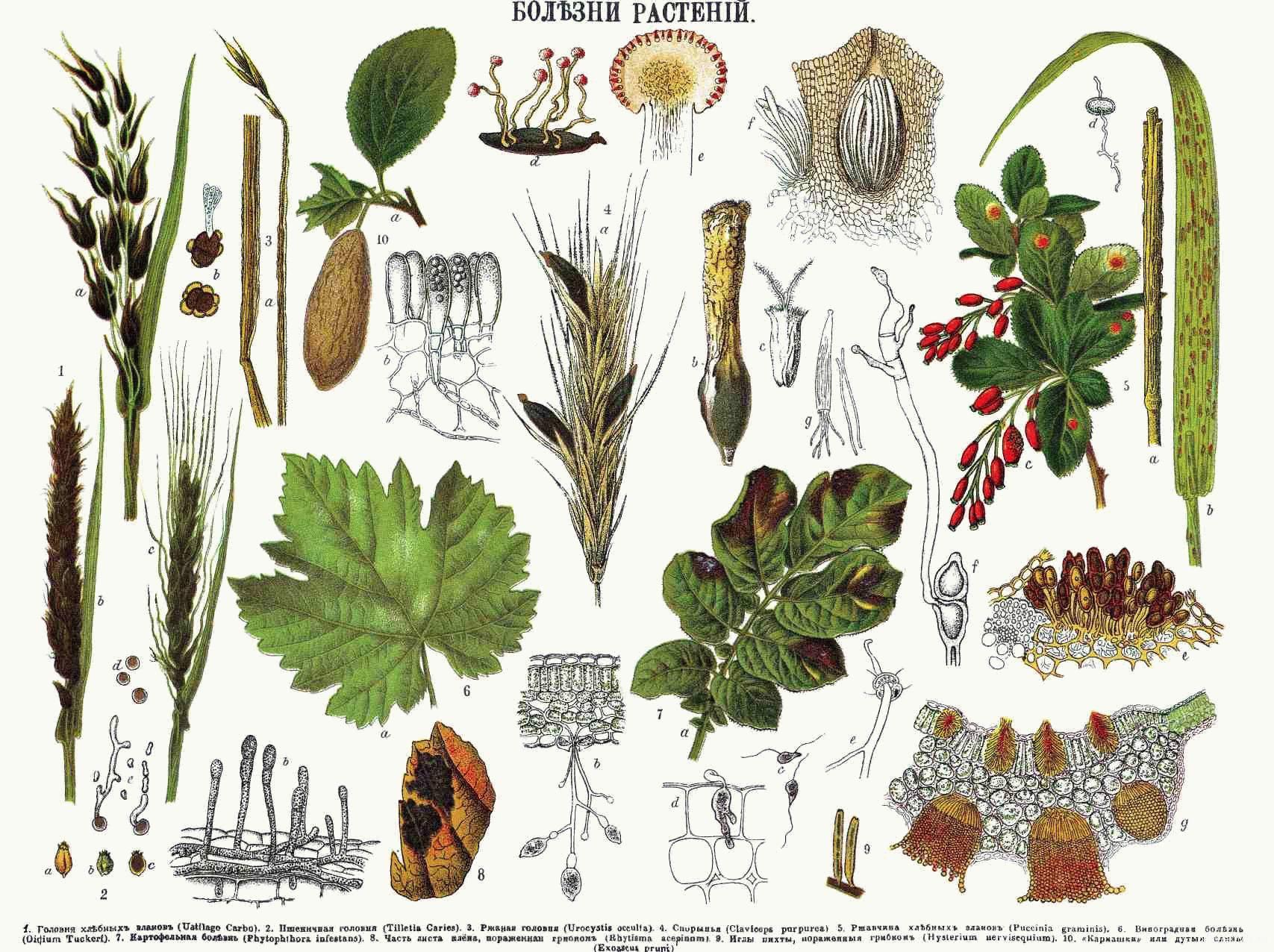 грибковые заболевания растений