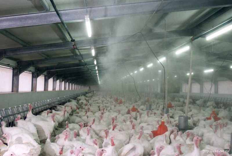 туманообразующая установка в птичнике