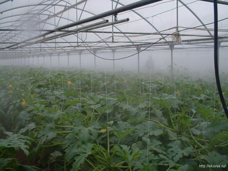туманообразующая установка в теплице