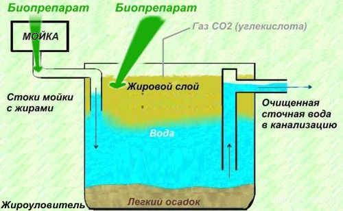 Утилизация жира из жироуловителей