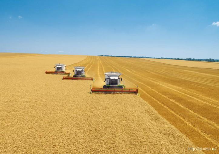 биотехнологии и растениеводство