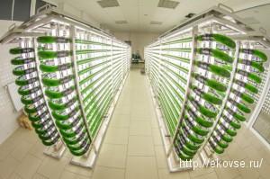 Биорекатор хлорелла, типы фотореакторов для хлореллы, емкостные и трубчатые фотореакторы для выращивания микроводорослей хлореллы