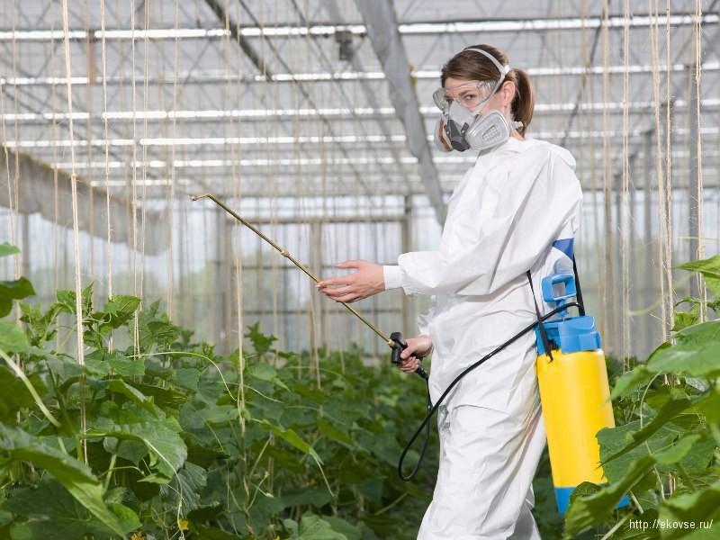 обработка инсектицидами