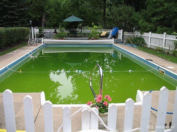 ванна с хлореллой