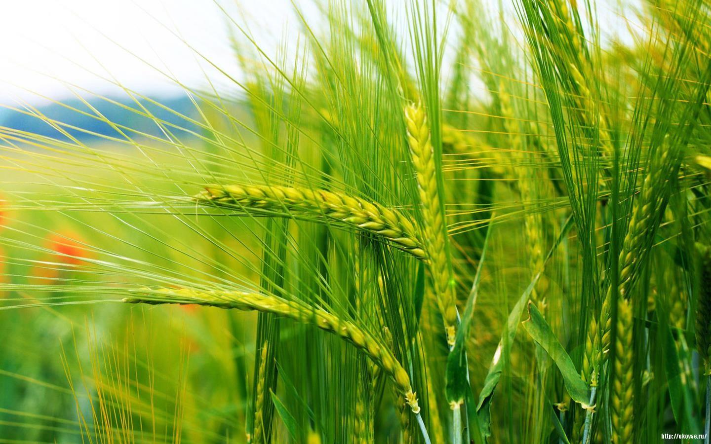 сельское хозяйство рационализаторская деятельность
