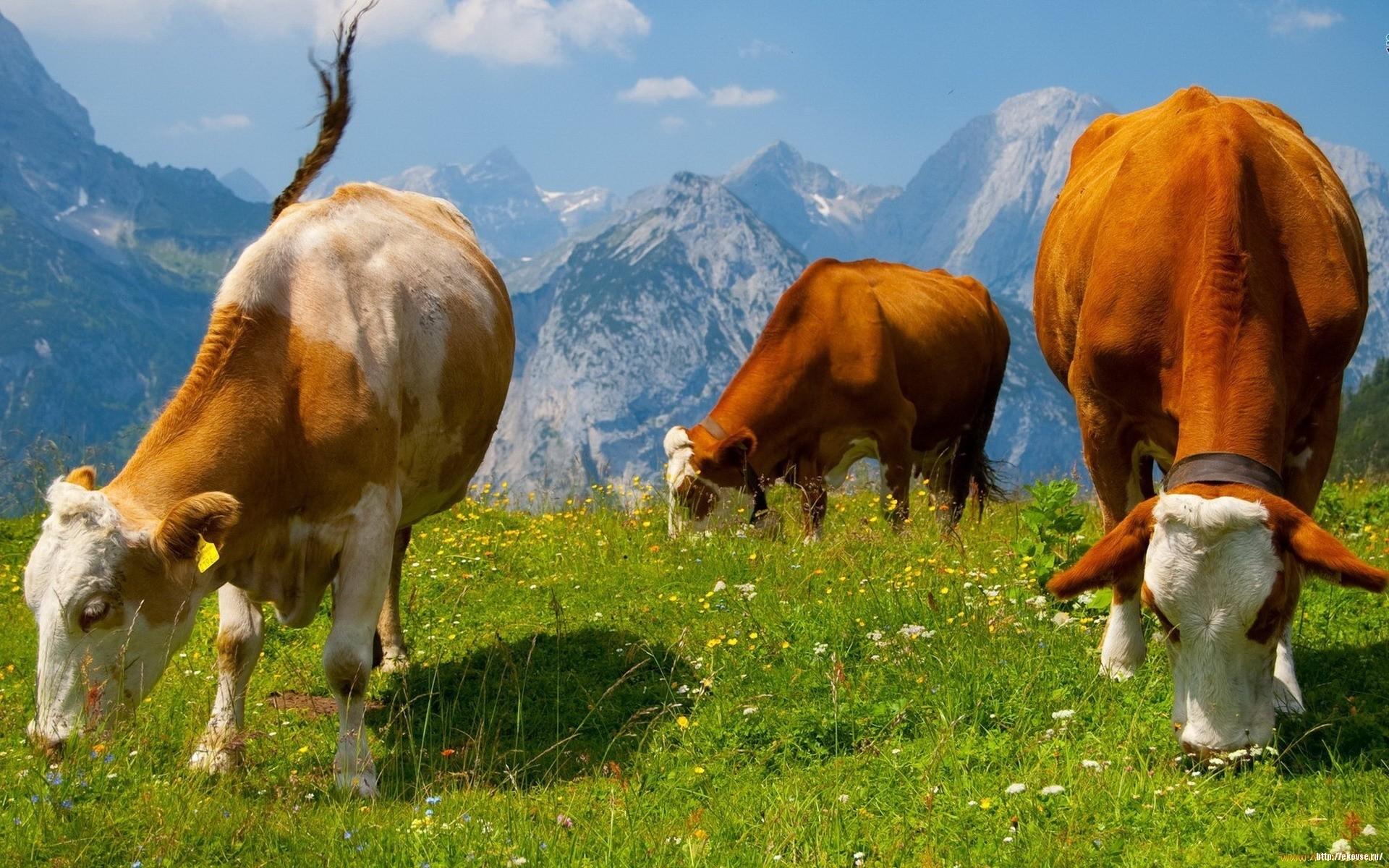 Бионекс профит для животных